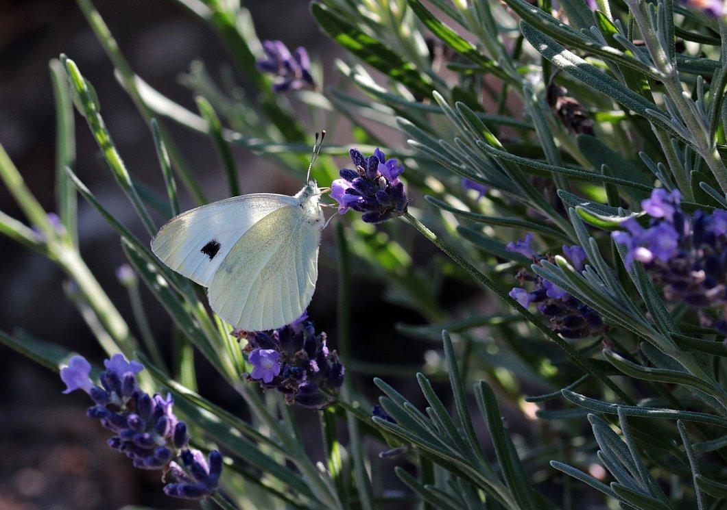 butterfly-3540287_1920