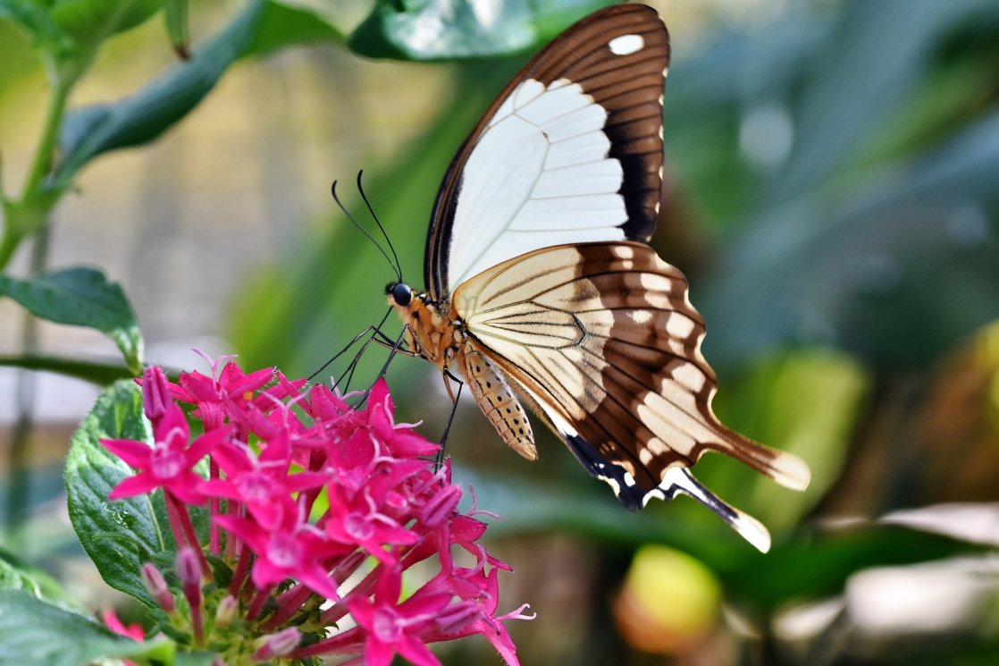 motyl na kwiatku - projekty prestige blog