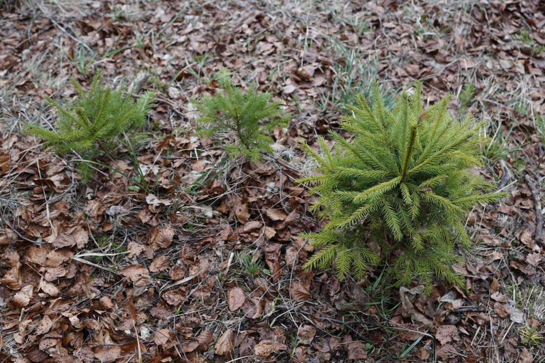 projekty prestige - blog - sadzonki drzewek