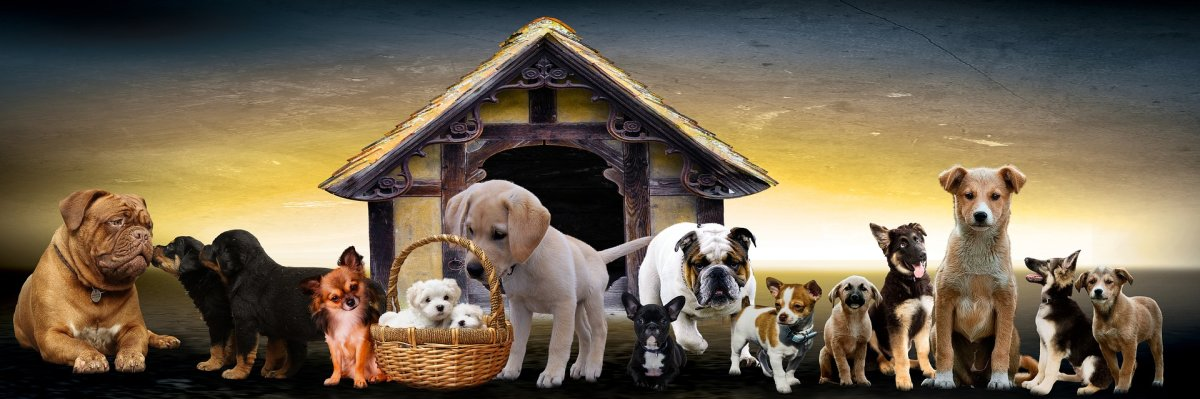 animals-3017138_1920