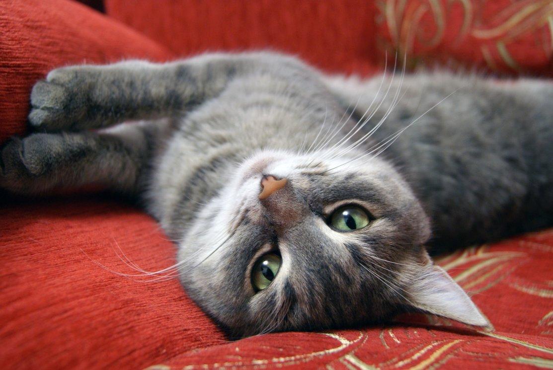 cat-2065710_1920