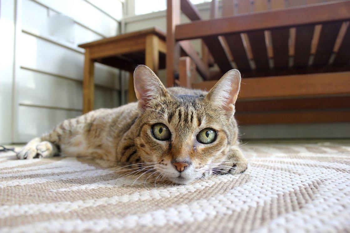 cat-2335665_1920