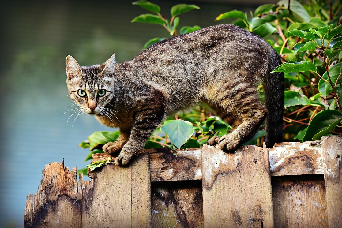 cat-3846780_1920