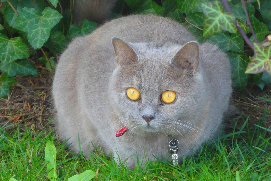 cats-4051108_1920