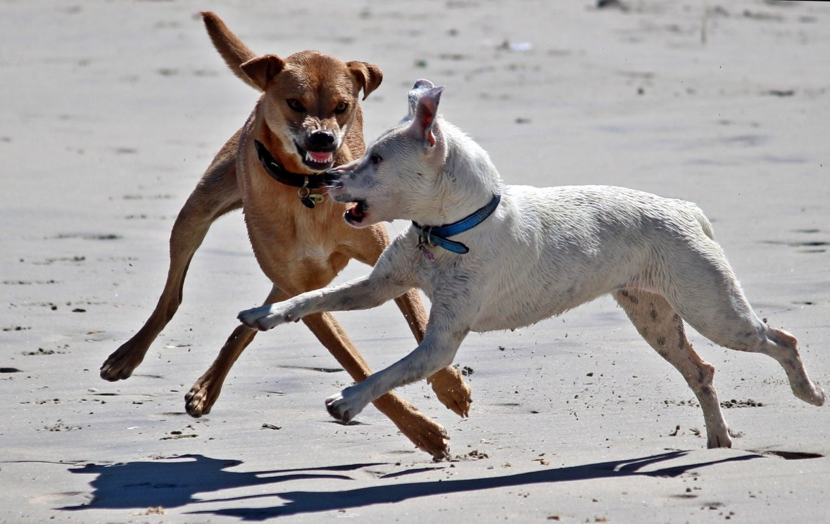 dogs-1345211_1920