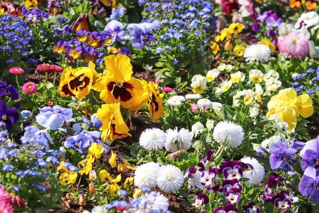 spring-flowers-4158513_1920