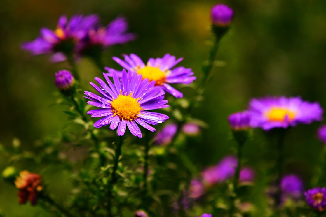 aster-3704588_1920