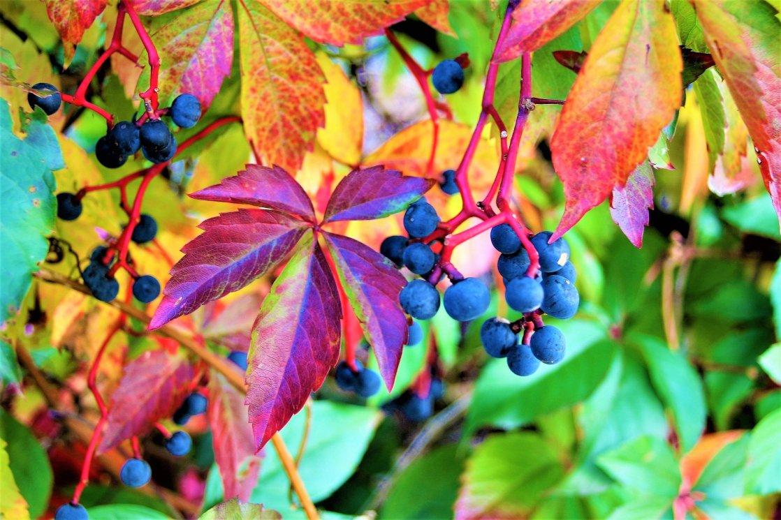 foliage-2828520_1920