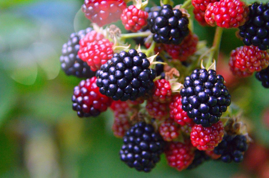 fruit-3062683_1920
