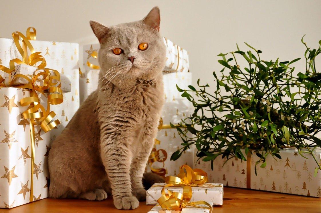 cat-1106804_1920